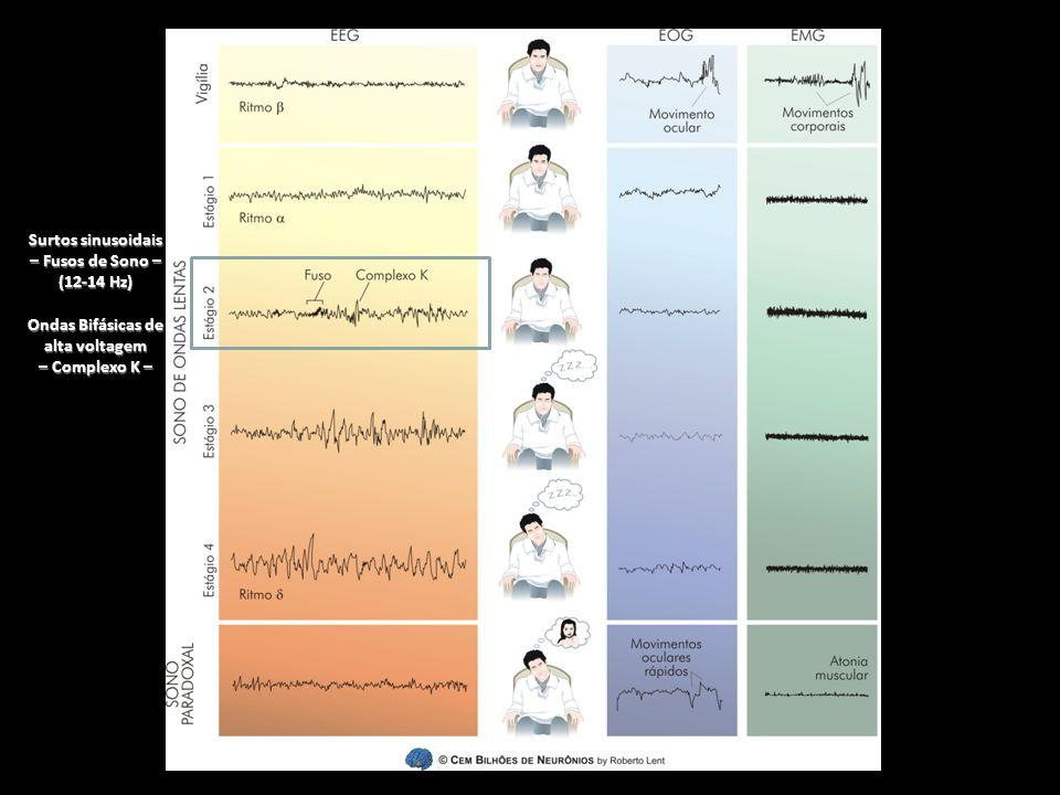 Surtos sinusoidais – Fusos de Sono – (12-14 Hz) Ondas Bifásicas de alta voltagem – Complexo K –