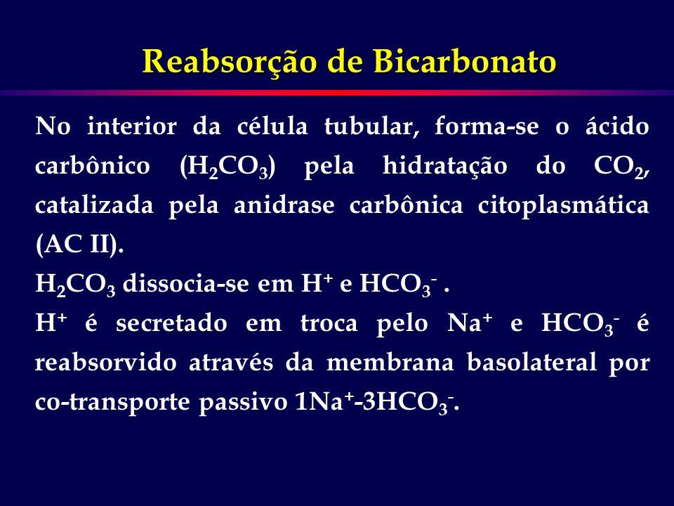 No interior da célula tubular, forma-se o ácido carbônico (H 2 CO 3 ) pela hidratação do CO 2, catalizada pela anidrase carbônica citoplasmática (AC I