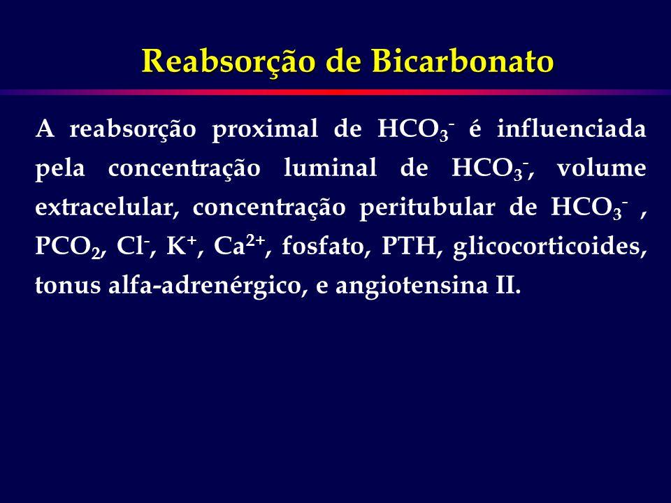 A reabsorção proximal de HCO 3 - é influenciada pela concentração luminal de HCO 3 -, volume extracelular, concentração peritubular de HCO 3 -, PCO 2,
