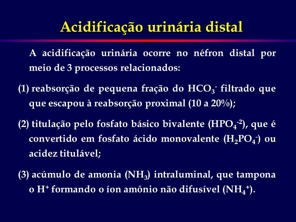 A acidificação urinária ocorre no néfron distal por meio de 3 processos relacionados: (1) reabsorção de pequena fração do HCO 3 - filtrado que que esc