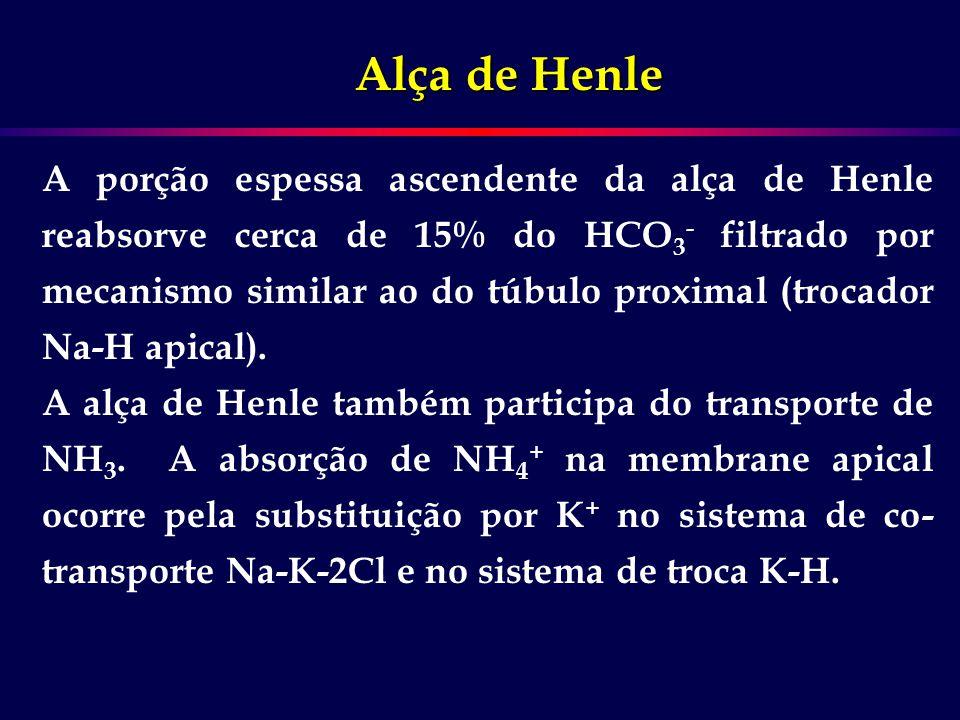 Alça de Henle A porção espessa ascendente da alça de Henle reabsorve cerca de 15% do HCO 3 - filtrado por mecanismo similar ao do túbulo proximal (tro