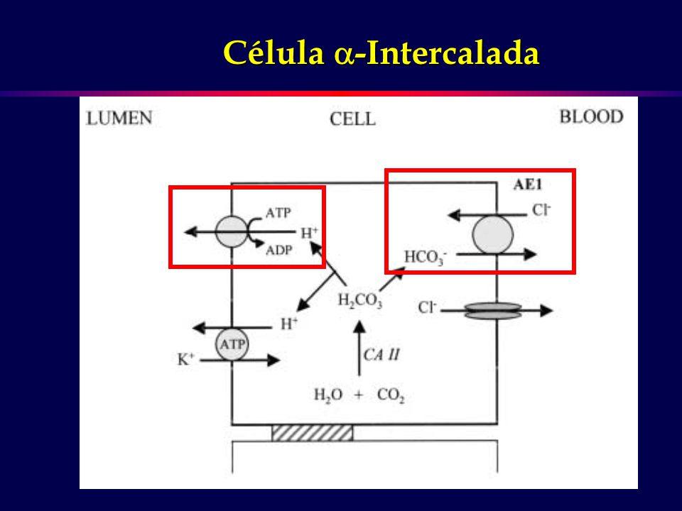 Célula -Intercalada