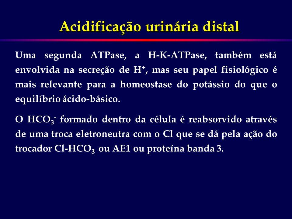 Uma segunda ATPase, a H-K-ATPase, também está envolvida na secreção de H +, mas seu papel fisiológico é mais relevante para a homeostase do potássio d