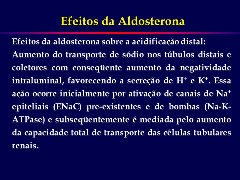 Efeitos da aldosterona sobre a acidificação distal: Aumento do transporte de sódio nos túbulos distais e coletores com conseqüente aumento da negativi
