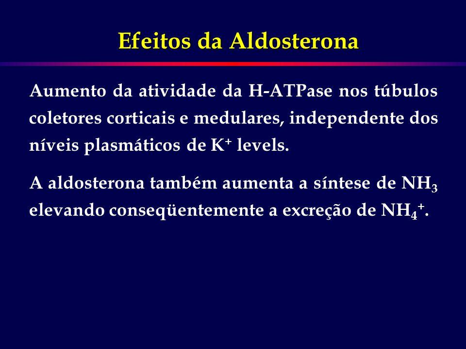 Aumento da atividade da H-ATPase nos túbulos coletores corticais e medulares, independente dos níveis plasmáticos de K + levels. A aldosterona também