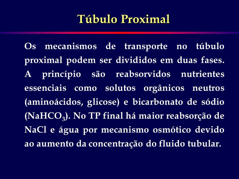 Os mecanismos de transporte no túbulo proximal podem ser divididos em duas fases. A princípio são reabsorvidos nutrientes essenciais como solutos orgâ