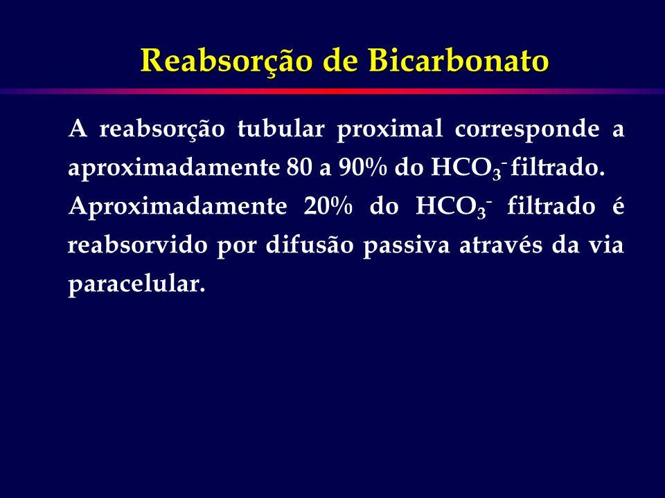 Reabsorção de Bicarbonato O principal processo é a secreção de H + na mebrana luminal por meio de um trocador Na-H (NHE-3) associado ao transporte de HCO 3 - na membrana basolateral através de um co-transportador Na-HCO 3 - (NBC-1).