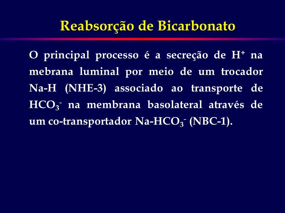 Reabsorção de Bicarbonato O principal processo é a secreção de H + na mebrana luminal por meio de um trocador Na-H (NHE-3) associado ao transporte de