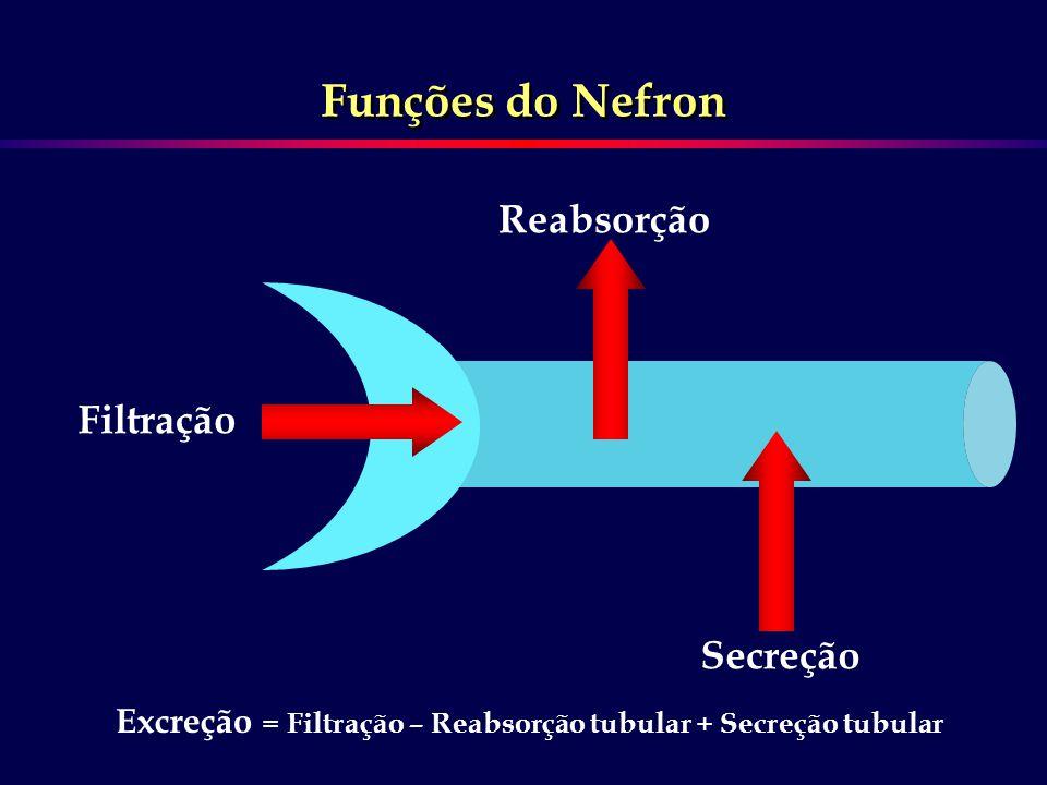 Filtração Reabsorção Secreção Funções do Nefron Excreção = Filtração – Reabsorção tubular + Secreção tubular