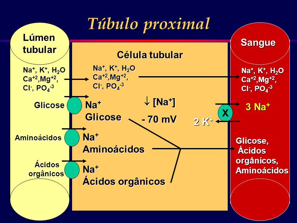 Na + Glicose Aminoácidos Ácidos orgânicos Glicose Aminoácidos Ácidos Ácidosorgânicos Na +, K +, H 2 O Ca +2,Mg +2, Cl -, PO 4 -3 Lúmentubular Sangue 3