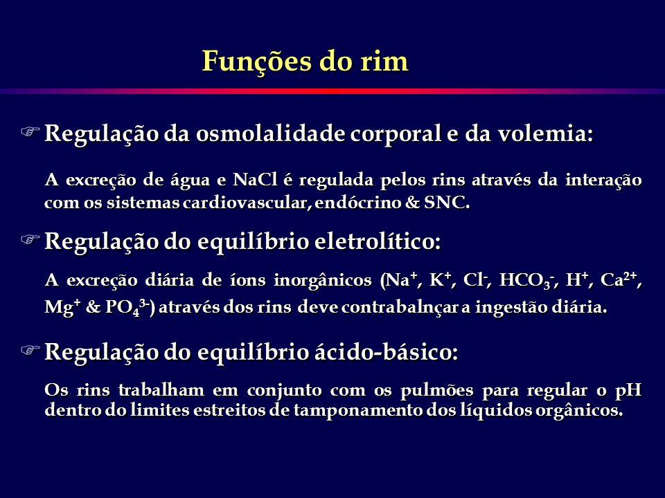 F Regulação da osmolalidade corporal e da volemia: A excreção de água e NaCl é regulada pelos rins através da interação com os sistemas cardiovascular