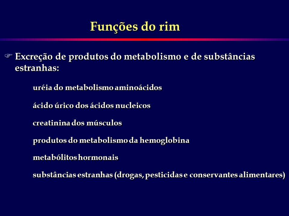 F Excreção de produtos do metabolismo e de substâncias estranhas: uréia do metabolismo aminoácidos ácido úrico dos ácidos nucleicos creatinina dos mús