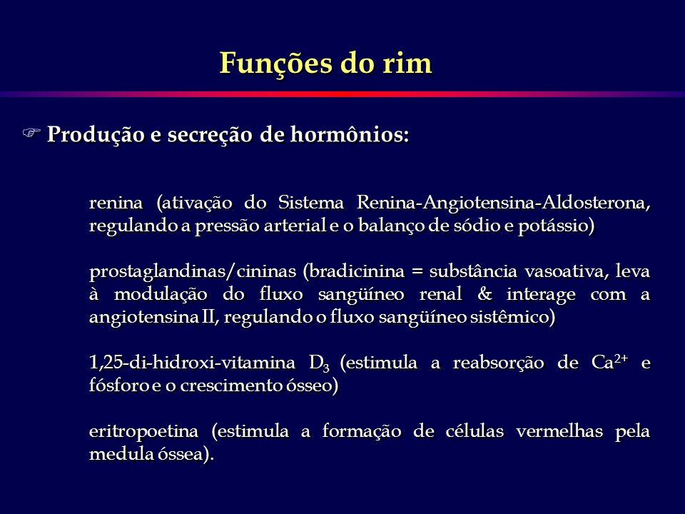 F Produção e secreção de hormônios: renina (ativação do Sistema Renina-Angiotensina-Aldosterona, regulando a pressão arterial e o balanço de sódio e p