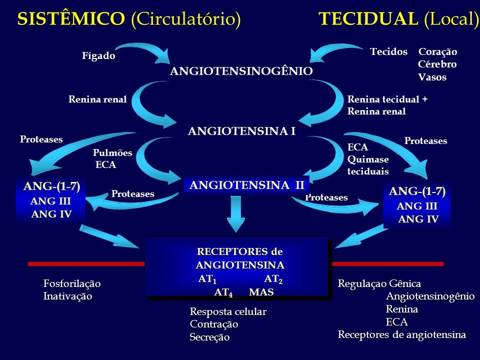 Proteases ANGIOTENSINOGÊNIO SISTÊMICO (Circulatório) TECIDUAL (Local) Fosforilação Inativação Fosforilação Inativação Resposta celular Contração Secre