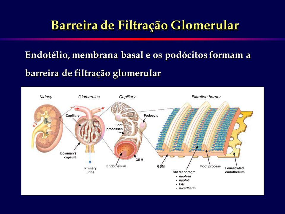 Barreira de Filtração Glomerular Endotélio, membrana basal e os podócitos formam a barreira de filtração glomerular Endotélio, membrana basal e os pod
