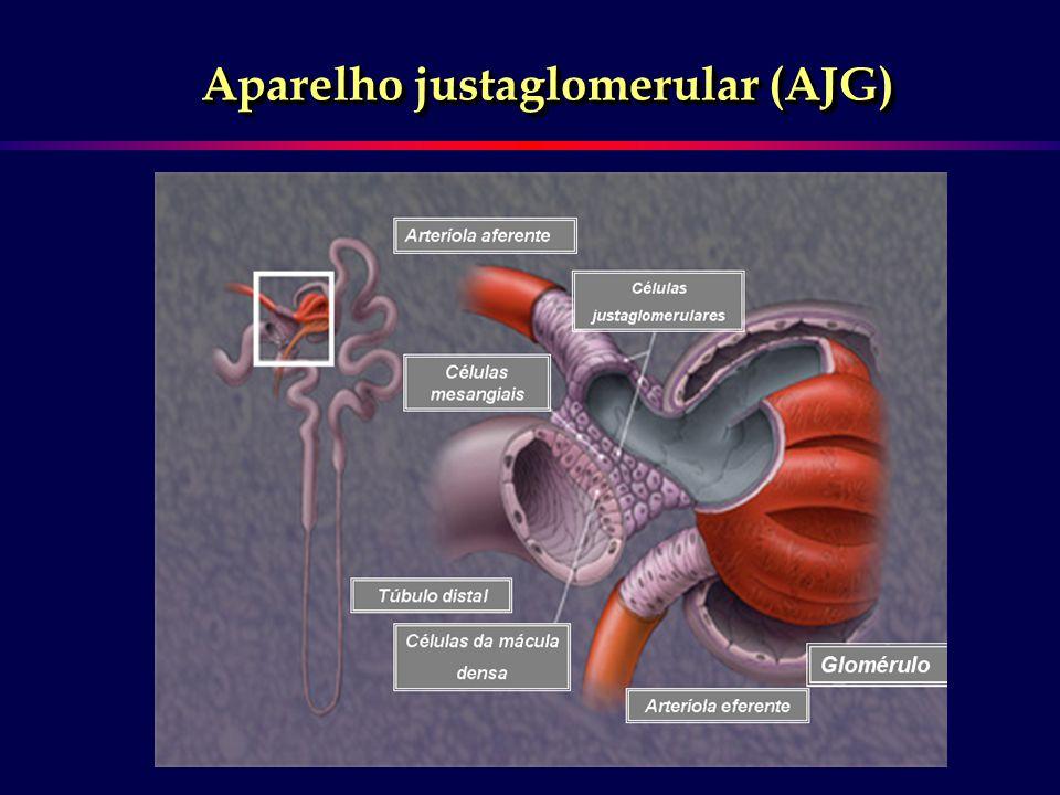 AFERENTEEFERENTE Hipertensão intraglomerular Vasoconstrição + exarcebada Pressão de filtração Pressão de filtração Proteinúria Proteinúria Ativação do SRA local Agentes proinflamatórios DEPOSIÇÃO DE MATRIZ FIBROSE INTERSTICIAL GLOMERULOESCLEROSE AT1AT2 Ação antiproliferativa e anti fibrótica Hipertensão Perda da capacidade de autoregulação Ang II