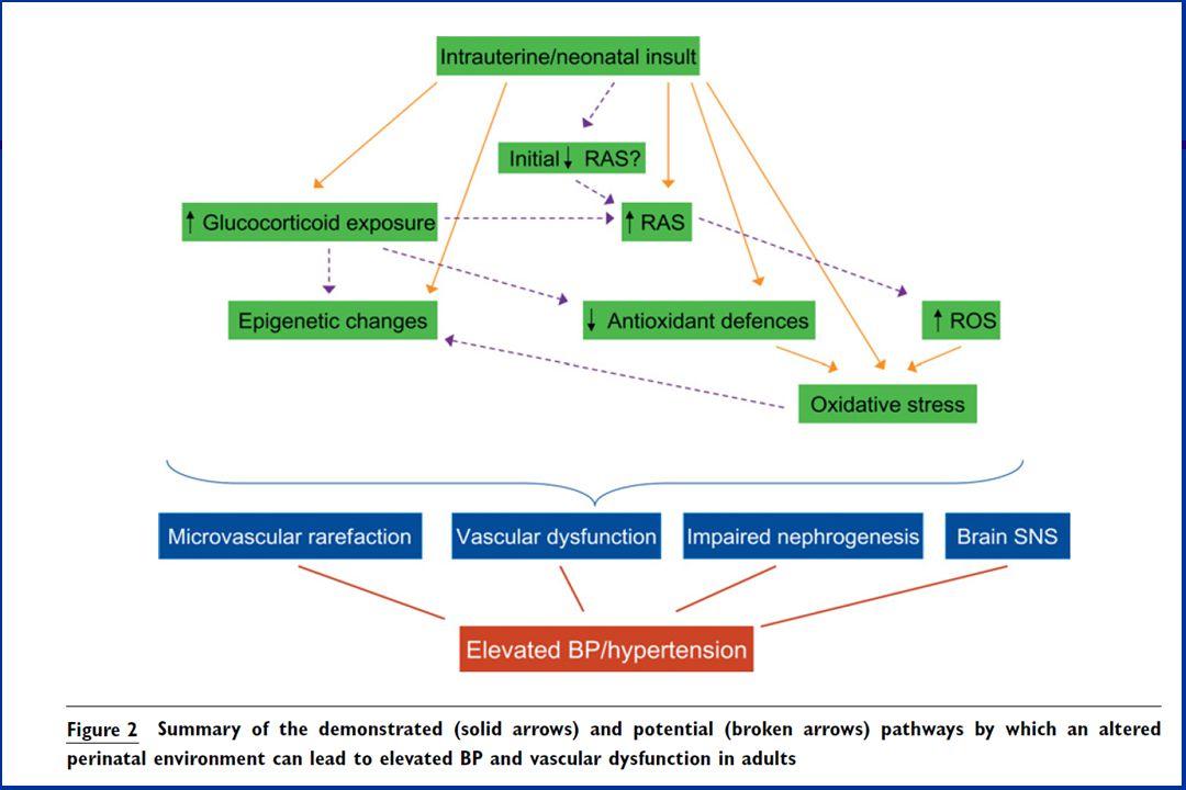 Aspectos Etiopatogenéticos