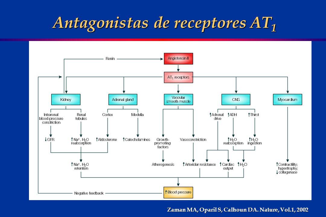 Antagonistas de receptores AT 1 Antagonistas de receptores AT 1 Zaman MA, Oparil S, Calhoun DA. Nature, Vol.1, 2002