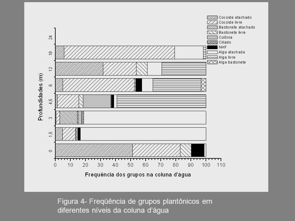 Figura 4- Freqüência de grupos plantônicos em diferentes níveis da coluna dágua