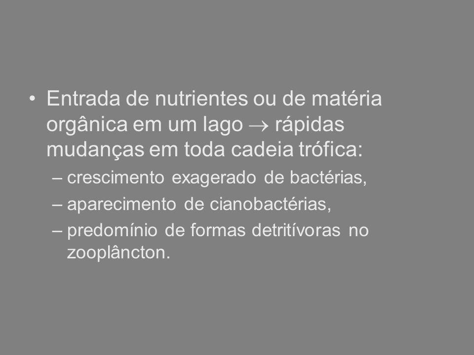 Entrada de nutrientes ou de matéria orgânica em um lago rápidas mudanças em toda cadeia trófica: –crescimento exagerado de bactérias, –aparecimento de