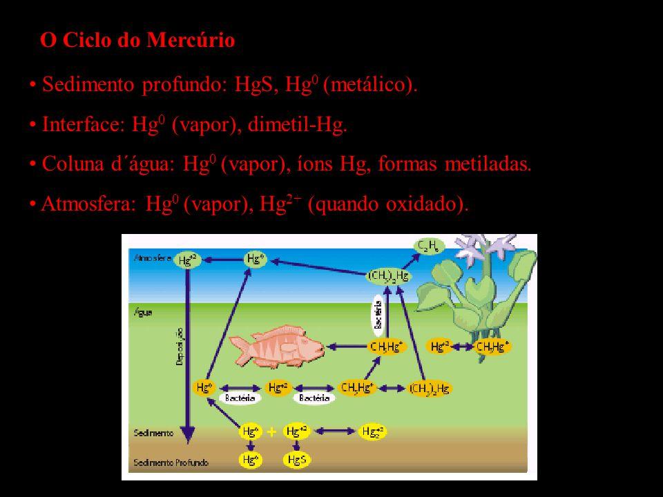O Ciclo do Mercúrio Sedimento profundo: HgS, Hg 0 (metálico). Interface: Hg 0 (vapor), dimetil-Hg. Coluna d´água: Hg 0 (vapor), íons Hg, formas metila