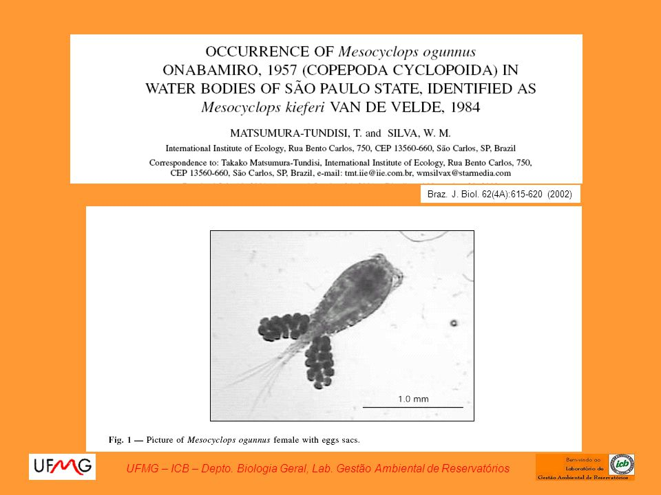 Braz. J. Biol. 62(4A):615-620 (2002)