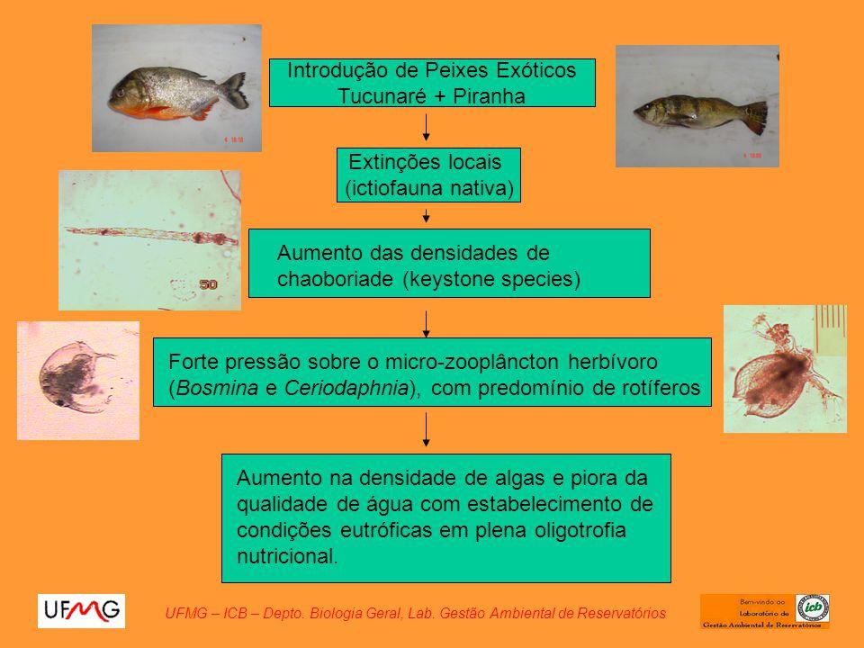 Introdução de Peixes Exóticos Tucunaré + Piranha Extinções locais (ictiofauna nativa) Forte pressão sobre o micro-zooplâncton herbívoro (Bosmina e Cer