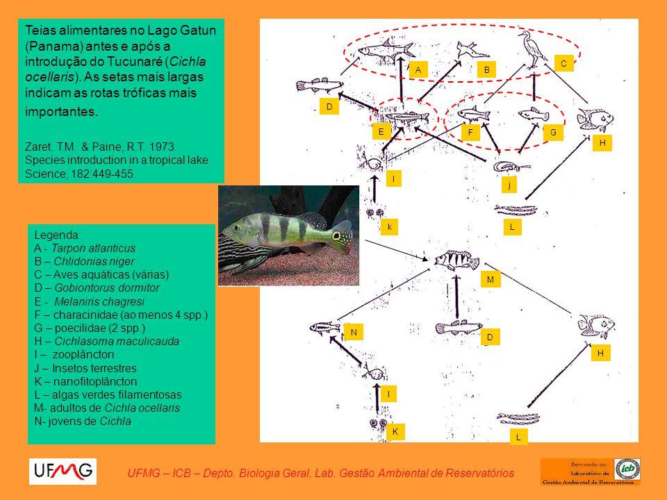 UFMG – ICB – Depto. Biologia Geral, Lab. Gestão Ambiental de Reservatórios Teias alimentares no Lago Gatun (Panama) antes e após a introdução do Tucun