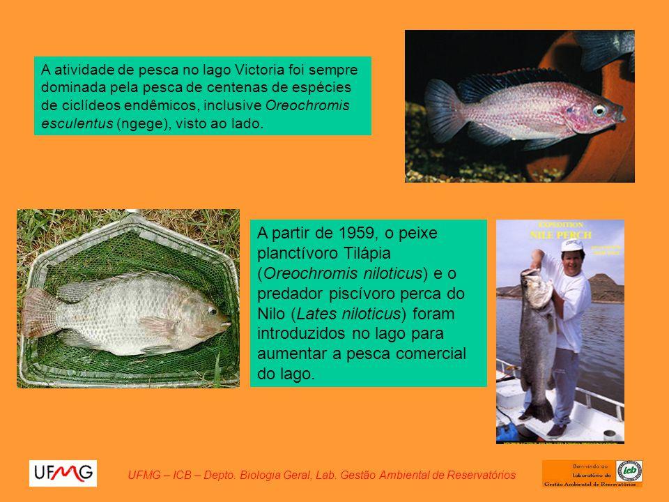 UFMG – ICB – Depto. Biologia Geral, Lab. Gestão Ambiental de Reservatórios A atividade de pesca no lago Victoria foi sempre dominada pela pesca de cen