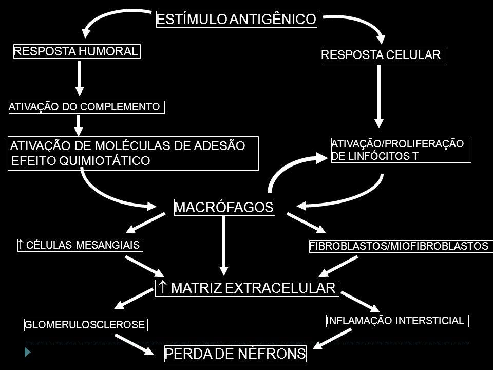 ATIVAÇÃO/PROLIFERAÇÃO DE LINFÓCITOS T MACRÓFAGOS FIBROBLASTOS/MIOFIBROBLASTOS ESTÍMULO ANTIGÊNICO ATIVAÇÃO DO COMPLEMENTO RESPOSTA HUMORAL RESPOSTA CE