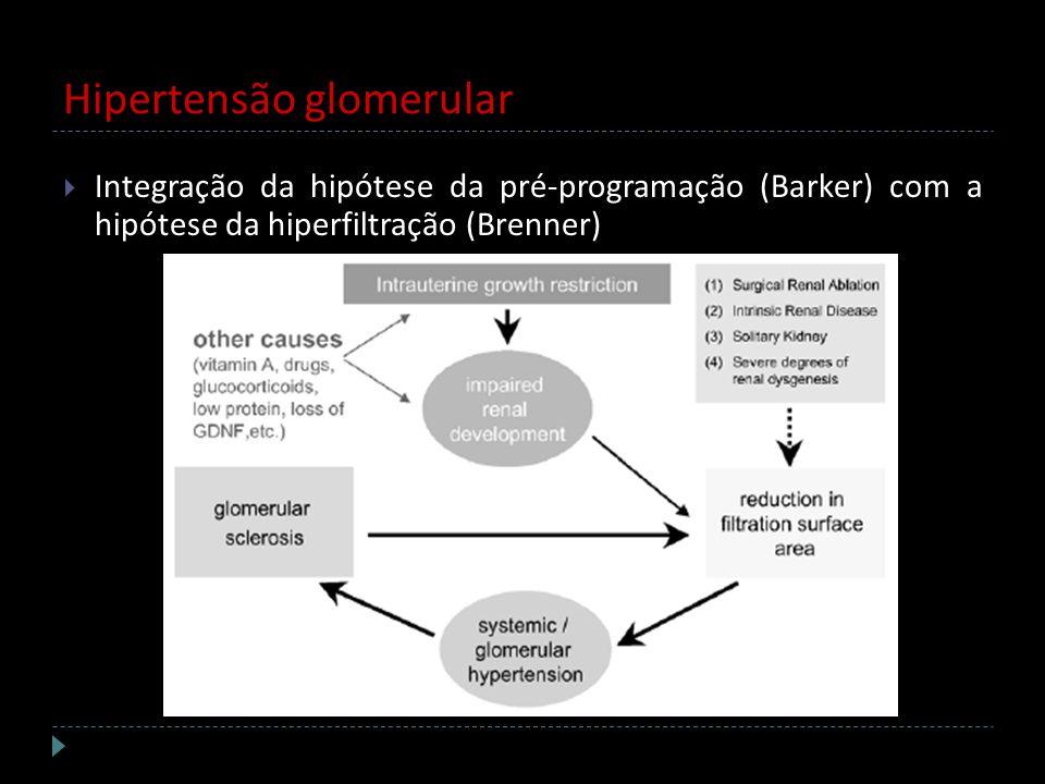 Hipertensão glomerular Integração da hipótese da pré-programação (Barker) com a hipótese da hiperfiltração (Brenner)