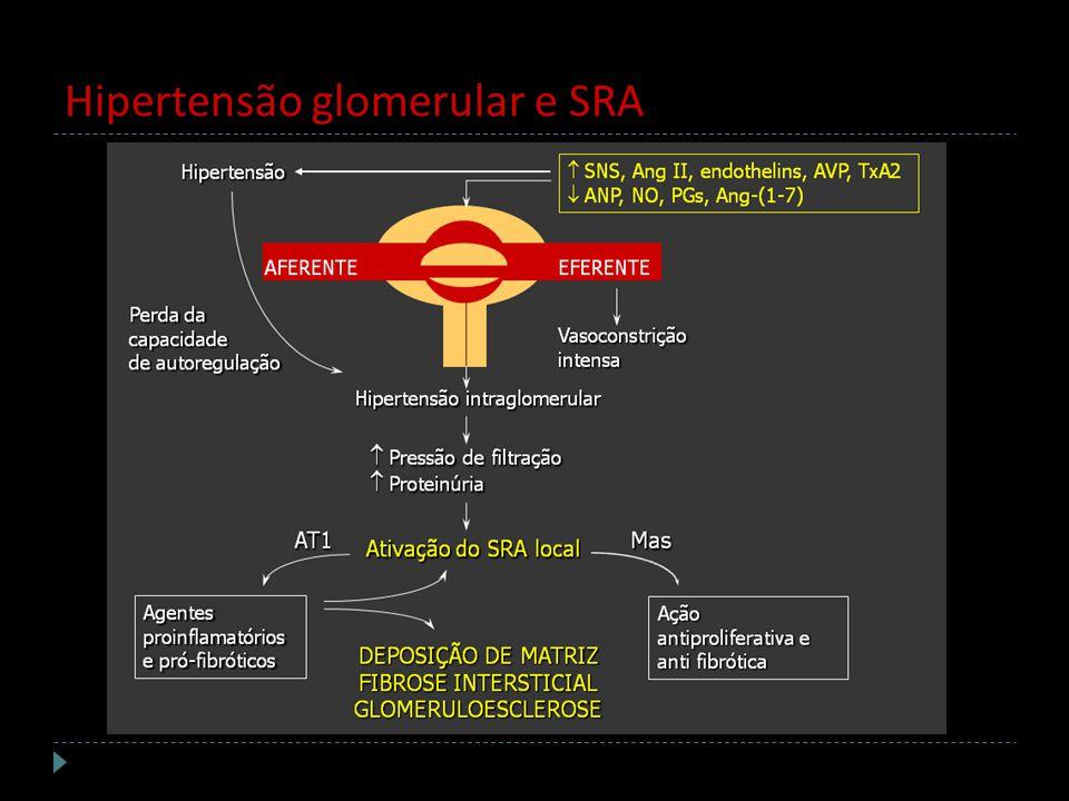 Hipertensão glomerular e SRA