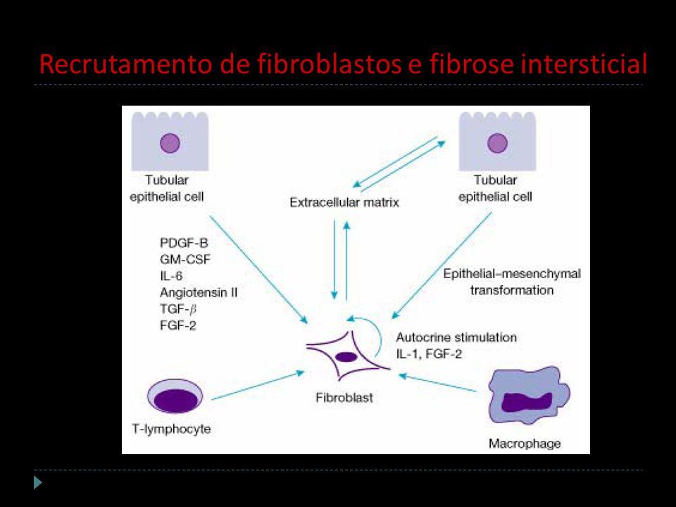Recrutamento de fibroblastos e fibrose intersticial