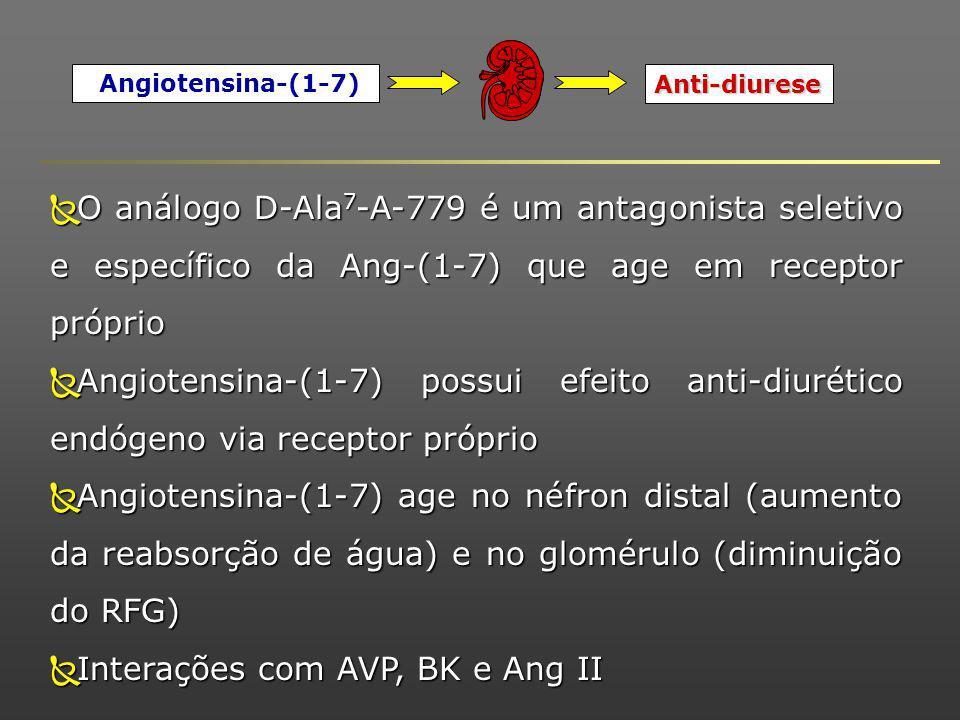 Angiotensina-(1-7) Anti-diurese O análogo D-Ala 7 -A-779 é um antagonista seletivo e específico da Ang-(1-7) que age em receptor próprio O análogo D-Ala 7 -A-779 é um antagonista seletivo e específico da Ang-(1-7) que age em receptor próprio Angiotensina-(1-7) possui efeito anti-diurético endógeno via receptor próprio Angiotensina-(1-7) possui efeito anti-diurético endógeno via receptor próprio Angiotensina-(1-7) age no néfron distal (aumento da reabsorção de água) e no glomérulo (diminuição do RFG) Angiotensina-(1-7) age no néfron distal (aumento da reabsorção de água) e no glomérulo (diminuição do RFG) Interações com AVP, BK e Ang II Interações com AVP, BK e Ang II