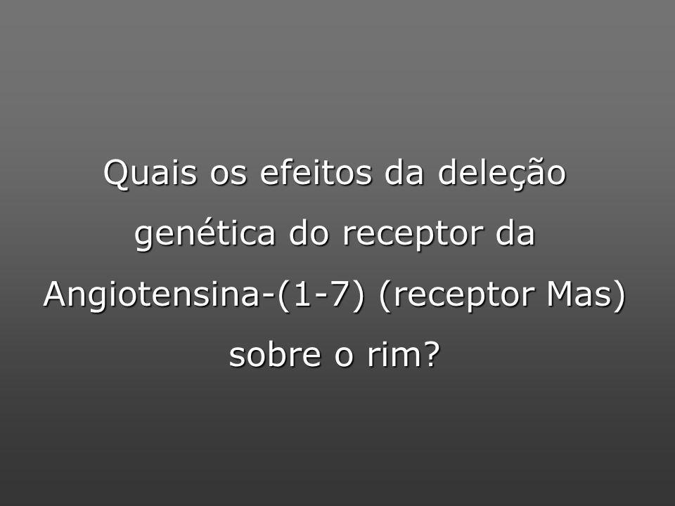 Quais os efeitos da deleção genética do receptor da Angiotensina-(1-7) (receptor Mas) sobre o rim?