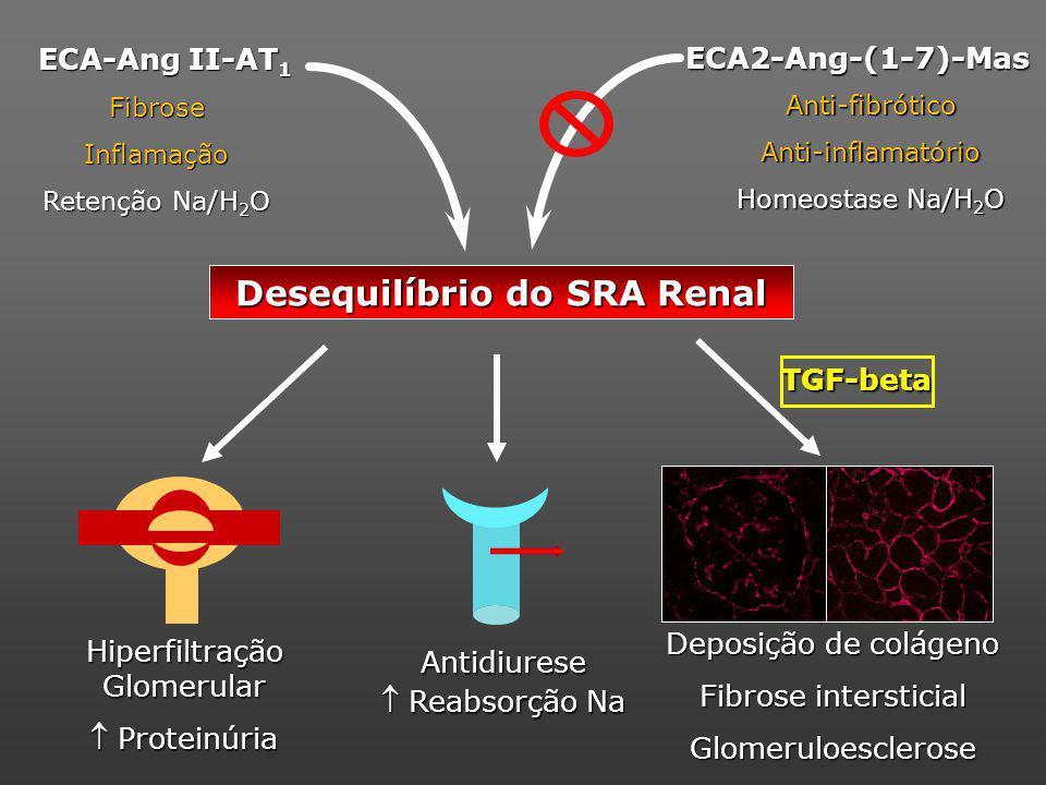 Desequilíbrio do SRA Renal FibroseInflamação Retenção Na/H 2 O ECA-Ang II-AT 1 Deposição de colágeno Fibrose intersticial Glomeruloesclerose Antidiurese Reabsorção Na Reabsorção Na Hiperfiltração Glomerular Proteinúria Proteinúria ECA2-Ang-(1-7)-Mas Anti-fibróticoAnti-inflamatório Homeostase Na/H 2 O TGF-beta