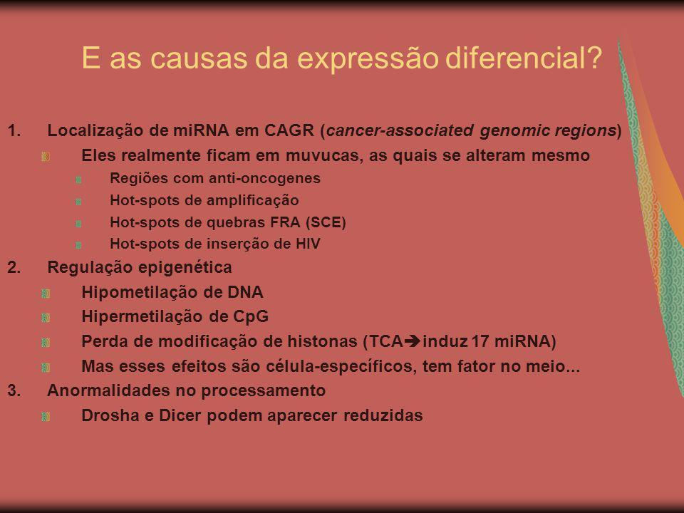 E as causas da expressão diferencial? 1.Localização de miRNA em CAGR (cancer-associated genomic regions) Eles realmente ficam em muvucas, as quais se