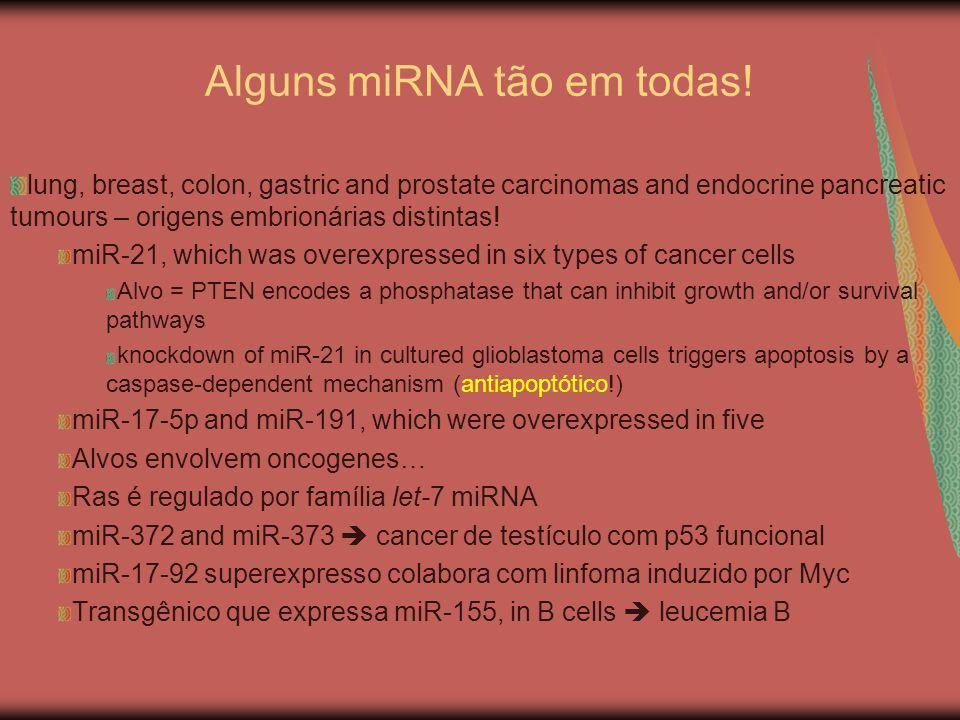 Alguns miRNA tão em todas! lung, breast, colon, gastric and prostate carcinomas and endocrine pancreatic tumours – origens embrionárias distintas! miR