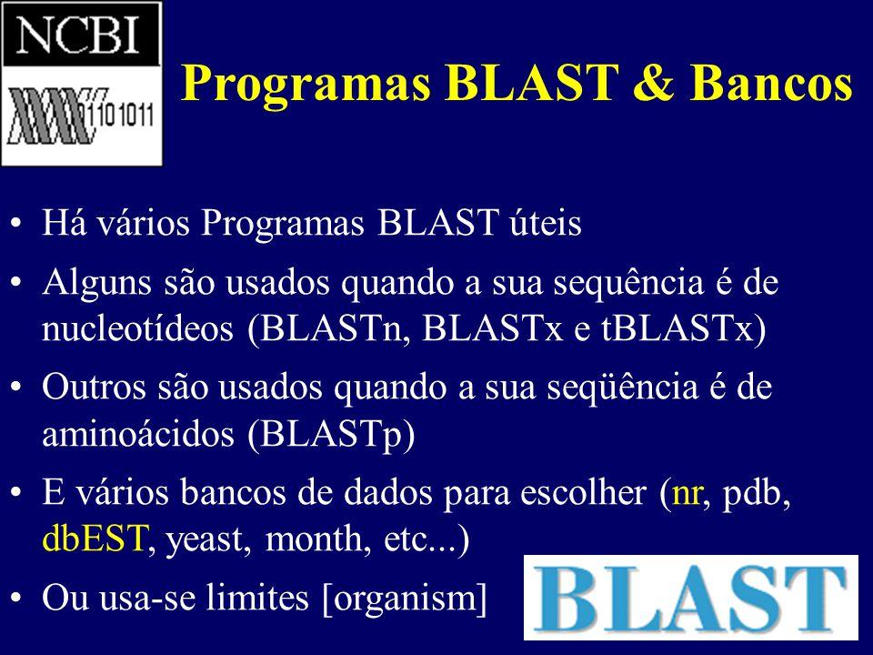 Programas BLAST & Bancos Há vários Programas BLAST úteis Alguns são usados quando a sua sequência é de nucleotídeos (BLASTn, BLASTx e tBLASTx) Outros são usados quando a sua seqüência é de aminoácidos (BLASTp) E vários bancos de dados para escolher (nr, pdb, dbEST, yeast, month, etc...) Ou usa-se limites [organism]