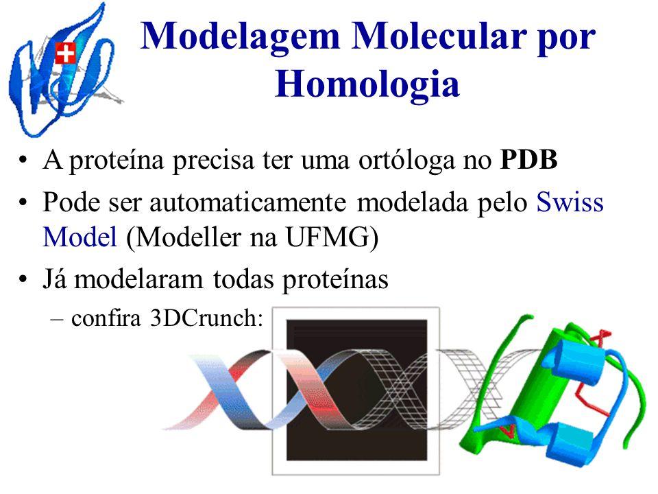 Modelagem Molecular por Homologia A proteína precisa ter uma ortóloga no PDB Pode ser automaticamente modelada pelo Swiss Model (Modeller na UFMG) Já modelaram todas proteínas – –confira 3DCrunch: