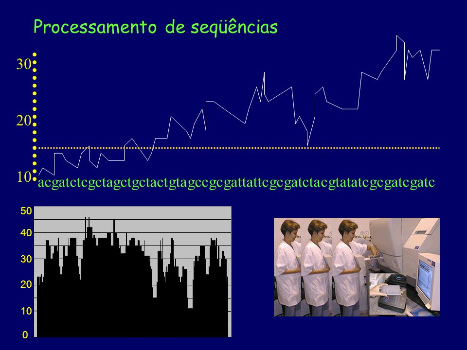 20 30 10 A nomeação é praticamente aleatória no início e no final, onde a chance de erro é alta (baixo valor de Phred) O programa Phred lê o cromatograma e nomeia as bases cromatograma acgatctcgctagctgctactgtagccgcgattattcgcgatctacgtatatcgcgatcgatc Cada base tem uma chance de erro de sua nomeação (10% = 0,1) A escala de Phred é semelhante à de pH multiplicado por 10: - chance de erro de 0,001 = 10 -3 = Phred 30 Processamento de seqüências 0 10 20 30 40 50