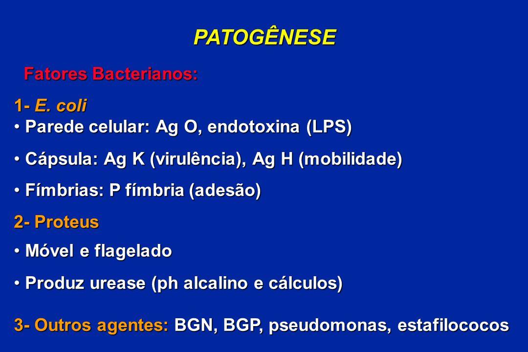 PATOGÊNESE Fatores Bacterianos: Fatores Bacterianos: 1- E. coli Parede celular: Ag O, endotoxina (LPS) Parede celular: Ag O, endotoxina (LPS) Cápsula: