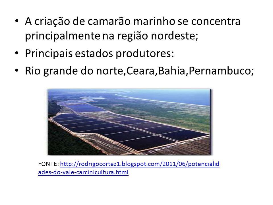 A criação de camarão marinho se concentra principalmente na região nordeste; Principais estados produtores: Rio grande do norte,Ceara,Bahia,Pernambuco