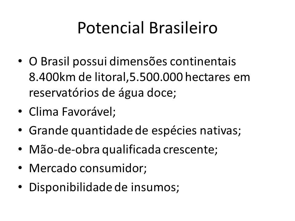 Potencial Brasileiro O Brasil possui dimensões continentais 8.400km de litoral,5.500.000 hectares em reservatórios de água doce; Clima Favorável; Gran