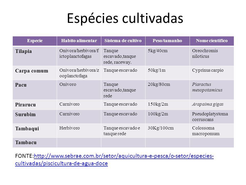 Espécies cultivadas EspecieHabito alimentarSistema de cultivoPeso/tamanhoNome cientifico Tilapia Onivora/herbivora/f ictoplanctofagas Tanque escavado,