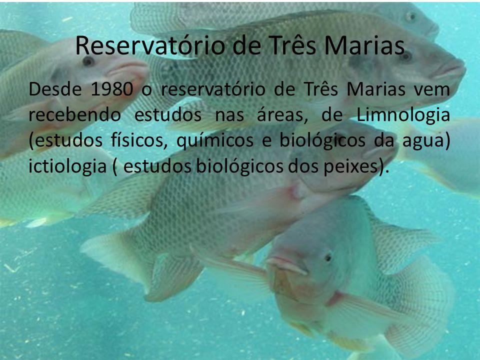 Reservatório de Três Marias Desde 1980 o reservatório de Três Marias vem recebendo estudos nas áreas, de Limnologia (estudos físicos, químicos e bioló