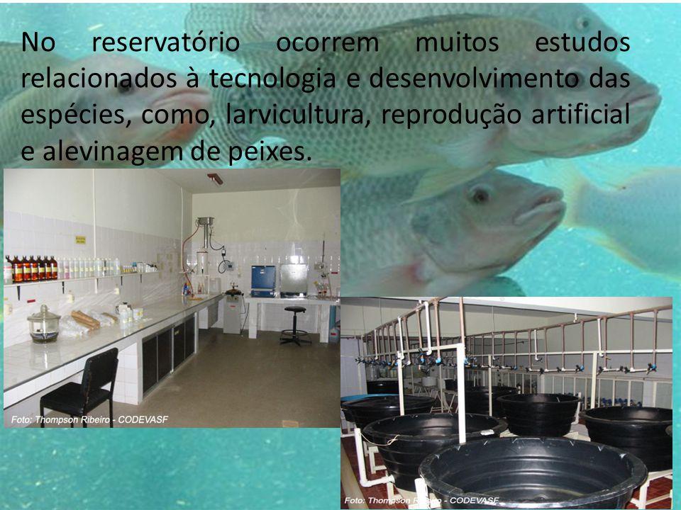 No reservatório ocorrem muitos estudos relacionados à tecnologia e desenvolvimento das espécies, como, larvicultura, reprodução artificial e alevinage