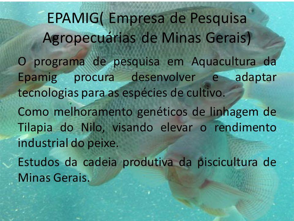 EPAMIG( Empresa de Pesquisa Agropecuárias de Minas Gerais) O programa de pesquisa em Aquacultura da Epamig procura desenvolver e adaptar tecnologias para as espécies de cultivo.