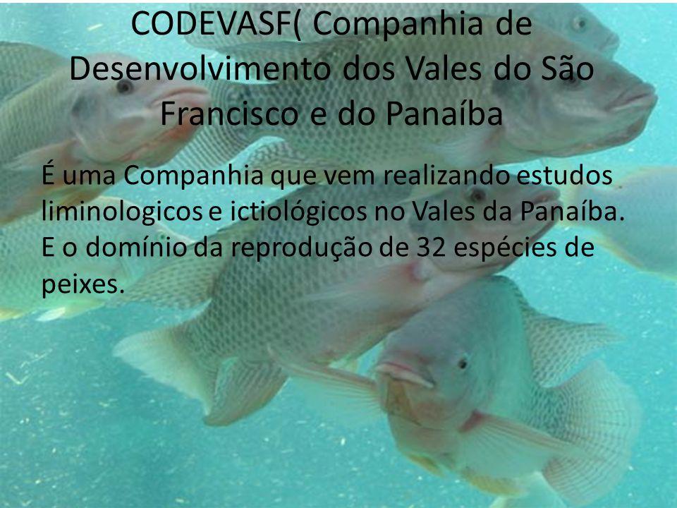 CODEVASF( Companhia de Desenvolvimento dos Vales do São Francisco e do Panaíba É uma Companhia que vem realizando estudos liminologicos e ictiológicos no Vales da Panaíba.