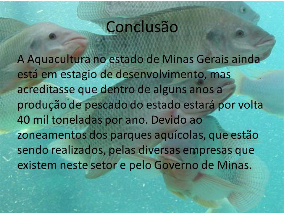 Conclusão A Aquacultura no estado de Minas Gerais ainda está em estagio de desenvolvimento, mas acreditasse que dentro de alguns anos a produção de pe